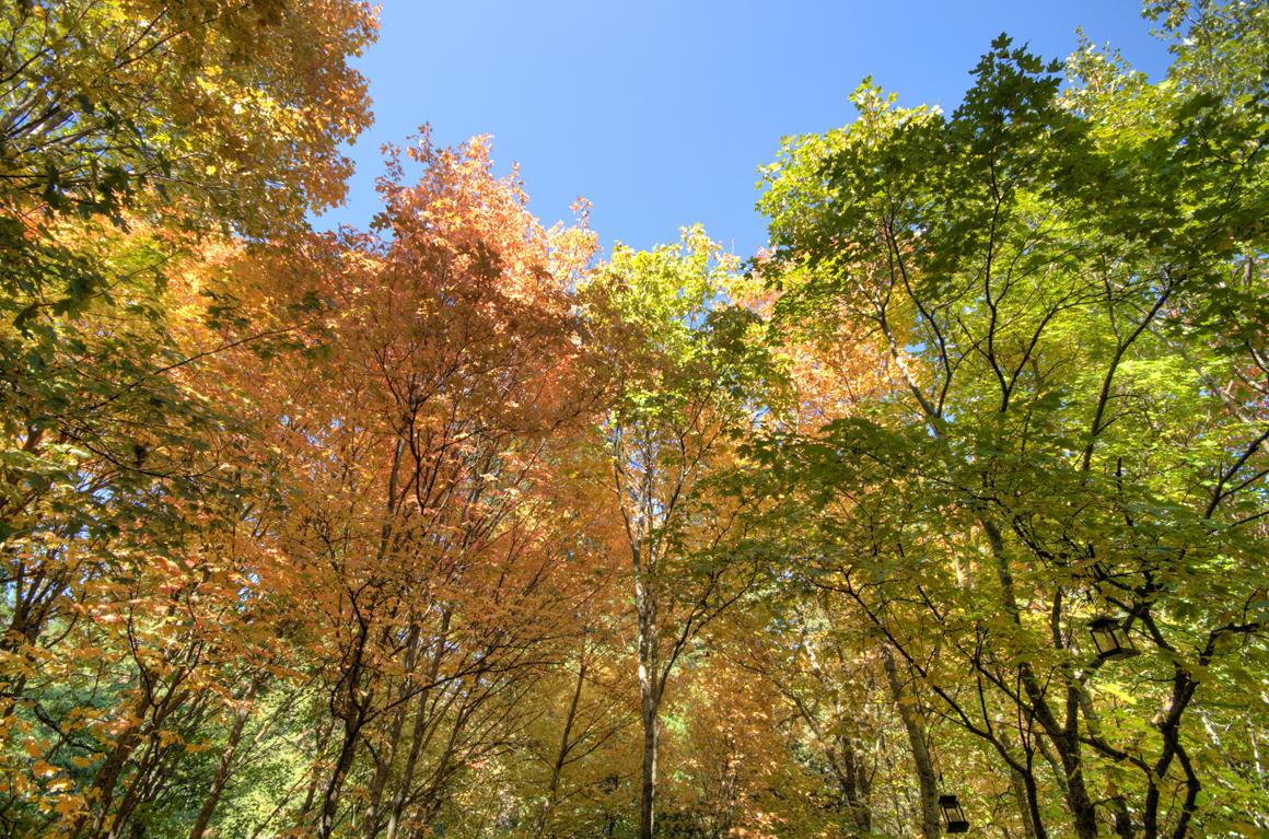 Deck Tree Canopy